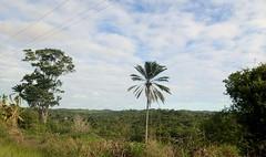 """Une partie de la végétation, c'est comme ça sur toute l'île • <a style=""""font-size:0.8em;"""" href=""""http://www.flickr.com/photos/113766675@N07/14233886524/"""" target=""""_blank"""">View on Flickr</a>"""