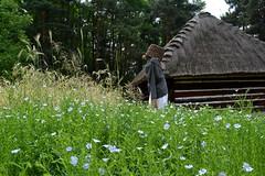 Vistula Ethnographic Park in Wygiełzów (agnieszka.gaczorek) Tags: park castle w poland skansen muzeum vistula zamek ethnographic lipowiec wygiełzów etnograficzny nadwiślański wygiełzowie