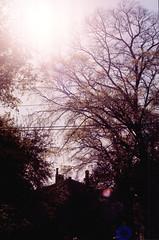 (sourire:) Tags: color film 35mm spring memphis south neworleans pizza 2014
