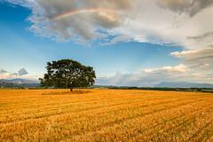Rainbow (Simone Angelucci) Tags: tree rainbow albero arcobaleno genazzano