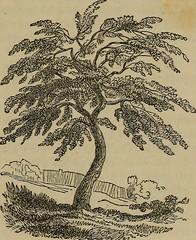 Anglų lietuvių žodynas. Žodis cherry-tree gum reiškia vyšnių medis, guma lietuviškai.