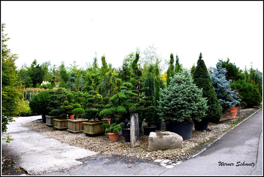 Evergreen Gartenbau the s best photos of baumschule and gartenbau flickr hive mind