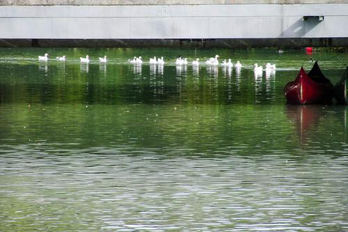 lake birds reflections boat spain ducks unesco aranjuez cosmostour royalpalaceofaranjuez tourtoeuropeinseptnov2012