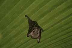 Bat_0002_resize