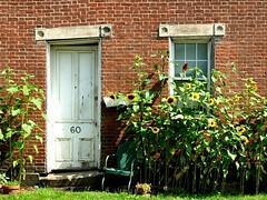 Number Sixty (e r j k . a m e r j k a) Tags: garden washington chair doors pennsylvania explore doorway sunflowers westmiddletown erjkprunczyk pa844
