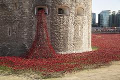 Tower Poppies   Tower of London - 37 (Paul Dykes) Tags: uk england london art ceramic poppy poppies worldwarone ww1 firstworldwar toweroflondon commemoration centenary inremembrance historicroyalpalaces ww1centenary ww100 towerpoppies bloodsweptlandsandseasofred