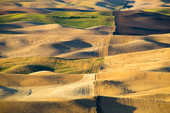 Steptoe Butte (CraigGoodwin2) Tags: wheat harvest wheatfields palouse drylandfarming steptoebutte inlandnorthwest