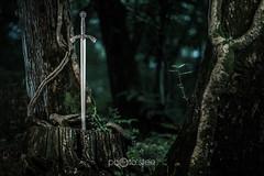 Sword of forests (Stee65) Tags: alberi natura fantasy sword concept mito antico luce oggetti spada medioevo bosco tipo armi mistero elinchrom soggetto cavallieri armibianche softboxopannelli rangerquadra quadrarx scenacostruita lonesword