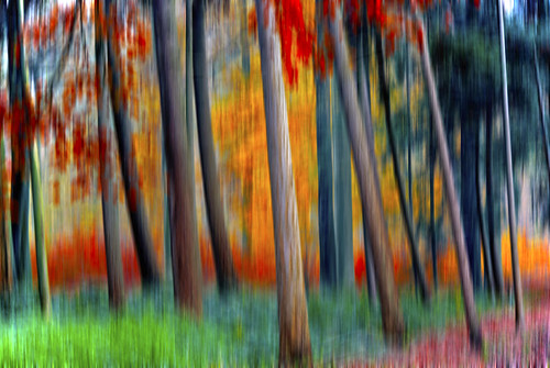 Forest on Fire - Trees in Motion 1 [Explored]