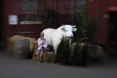 Any N.E. Will Do (eddi_monsoon) Tags: portrait selfportrait self cow bull 365 pne selfie threesixtyfive