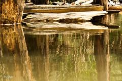 (33 Photography) Tags: wood light shadow lake forest dead surface  lightandshadow nantou         lakesurface nantouhsien