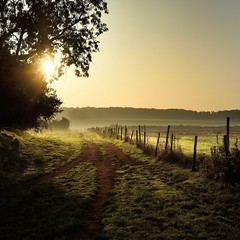 (Eric Goncalves (cathing up again!)) Tags: morning trees england mist nature rural sunrise golden nikon tracks perspectives peaceful gloucestershire hedge rays fx autumnal treescape forestofdean