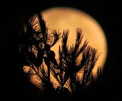 Luna / Lune / Moon / Månen, Mellieha, Malta 2014 (Audiotribe) Tags: moon lune canon focus dof malta luna powershot mellieha