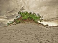 Duna Verde. (Ariel NZ) Tags: verde playa arena cielo nubes duna piriapolis20141579
