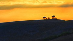 Tuscany, Italy (posterboy2007) Tags: trees sunset italy silhouette europe tuscany rx100