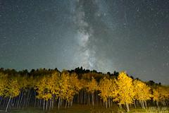 Fall(ing) Stars (Awake at Night) Tags: awakeatnightphotography fallcolors stars milkyway longexposure nikon d810 southdakota blackhills wideangle wallart nightsky