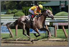 Fact Finding breaks his maiden (Spruceton Spook) Tags: factfinding maidens saratoga horseracing horses johnvelazquez