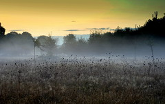 Orchard Meadow #55 (ursulamller900) Tags: orchardmeadow morningdew sunrise fog nebel obstbaumwiese autumn herbst