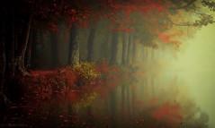 morning mood! (pat.thom974) Tags: morning mood forest fog art dark light red reflection trees