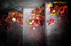 Autumn series (Nick Kenrick.) Tags: autumn fall leaves steps miksang