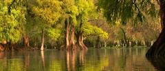 PARADISE. (NIKONIANO) Tags: surreal agua water lake lago camcuaro michoacn tree rbol mxico nikoniano sergioalfaroromero green verde travel viajes forest