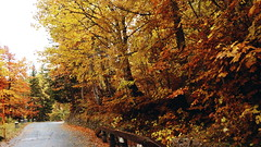 Fall drive through Kranjska Gora (ScotchBroom) Tags: slovenia bled triglavnationalpark triglavski triglav fallcolors autumn fall drive