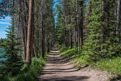 Trail - Hermitage Point - Colter Bay - Grand Teton National Park - Wyoming - 21 June 2016 (goatlockerguns) Tags: bison grandtetonnationalpark marina lake jackson mountains mountain trail trees forest nature natural teton grand wyoming usa unitedstatesofamerica west western