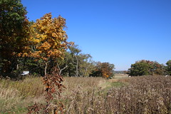 Visit to Glacial Park (Ringwood, Illinois) - October 14, 2016 (cseeman) Tags: glacialpark ringwood illinois mchenrycounty mchenrycountyconservationdistrict parks publicparks naturepreserve glacialparknaturepreserve prayingmantis fall snake cranes sandhillcranes hills rollinghills squirrels ducks water paths trails sunny