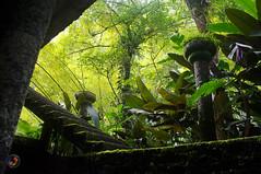 Jungle (omar de luna) Tags: xilitla laspozas edwardjames slp mexico pentax jungle nature sierra