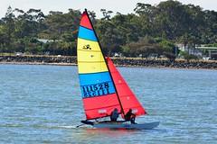 DSC_0343 (LoxPix2) Tags: loxpix queensland australia sailing catamaran trimaran nacra hobie arrow moth 505 maricat humpybongyachtclub humpybash aclass f18 mosquito laser bird spinnaker woodypoint