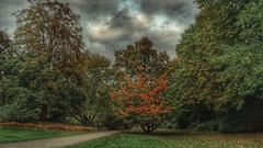 (DiSorDerINaMirrOR) Tags: plantenundblomen park hamburg germany nature autumnalcolours autumn fall trees grass leaves sunday clouds sky cold