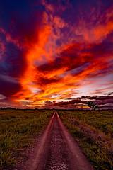 On A Different Cloud (miTsu-llaneous) Tags: trinidad trinidadandtobago nature naturephotography sunset dusk evening clouds agriculture track road rural vivid caribbean nikon d5200 tokina 1116mm