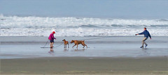 Going in for the Sniff (sea turtle) Tags: oregon seaside beach ocean pacific pacificocean people water sand dog dogs