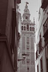 La Giralda (Sevilla) (Jeronimo Gomato Esperilla) Tags: jegoes 2016 canoneos1100d canon eos sevilla andalucía seville españa spain europa giralda torre duotono