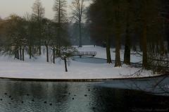 Tervuren.Belgium (Natali Antonovich) Tags: winter tervuren belgium belgie belgique nature christmas snow frost landscape birds water park