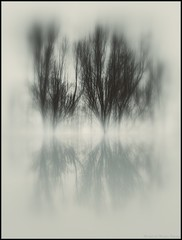 Winter light ... (michel di Mglio) Tags: arbres reflection blur fog
