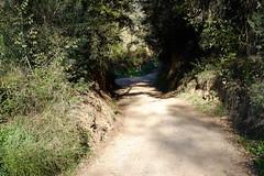 DSCF0093 (elmartin76) Tags: valles palau sentmenat track path forest