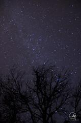 voie lacte dans la foret (AoneToad (Aurelynx)) Tags: night nuit pose longue toiles stars voie lacte milky way pentax k5 pentaxk5