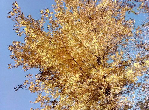 Sweet Sunny November #blue #yellow #leaves #instamood #nature #autumn #odessagram #odessaphoto #trees🌳 #autumnperson #instago #instalike #legendsofthefall #photographybyflannabell #instadaily #picoftheday #ukrainian_insta #november #naturel