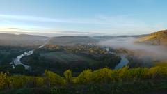 saar (Denkrahm) Tags: kanzem wiltingen saar mist nebel river germany eifel morning vineyards denkrahm deutschland