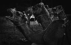 9492338800_af7672b75f_c (3lio__) Tags: ali al ajmi alajmi 3li 3lio photography photograph photo photos photographer oman omani