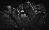9492338800_af7672b75f_c (3lio__) Tags: ali al ajmi alajmi 3li 3lio photography photograph photo photos photographer oman omani علي العجمي عجمي ليو عليو عليوه مصور المصور صور صوره صورة عمان عماني