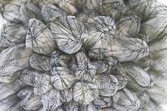 DUI_8263r (crobart) Tags: world treads festival oakville cloth fabric fibre textile art artwork
