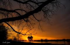 Der Tag geht.. (cornelia_auguste) Tags: abendstimmung abendlicht abenddämmerung abendstunde abendhimmel abendsonne äste ast bäume corneliaauguste düsseldorf deutschland detailaufnahme farbenspiel farbenrausch farben germany gegenlicht himmel himmelsstimmung himmelsfarben illumination lichtstimmung light nrw outdoor rheinufer rhein rheinaue sonnenuntergang skyline sonne träume ufer wasser wolkenstimmung water wolkenbildung skylinie sky laternen spiegelung orange