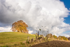 When sun and clouds play together... (hjuengst) Tags: limetree linden clouds sun field acre tree ebersberg vogelberg riedhof bavaria