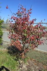 IMG_0933 (hammonton_garden) Tags: 2016 communitygarden fall hammonton southjersey nj gardenstate