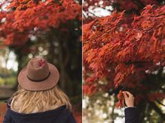 (CarolienCadoni..) Tags: sonyslta99 50mmf14 sal50f14 red autumn autumnleaves autumncolors fall leaf leafs hat backshot hand stadskanaal groningen nederland netherlands november outdoor