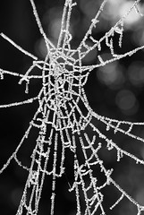 frozen cobweb 02 nov 16 (Shaun the grime lover) Tags: cheshire manchesterroad cemetery graveyard frost frozen freezing cobweb spiders web ice warrington detail monochrome winter