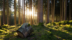 Illuminated forest (Sebo23) Tags: forest wald moos licht lichtstimmung gegenlicht light lightbeam sun sonne sonnenstrahlen canon6d canon24704l