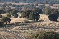 Dehesa de otoño (ramosblancor) Tags: naturaleza nature paisaje landscape dehesa bosquemediterráneo mediterraneanforest encina holmoak quercusilex cereal field otoño autumn fall madrid